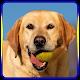 Dog training for PC-Windows 7,8,10 and Mac
