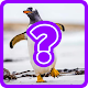 Guess the Animal Quiz Android apk