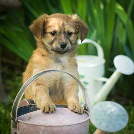 by Rick W - Animals - Dogs Puppies