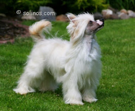 """Photo: Cointroau """"Amber"""" already one year in Solino's kennel :)"""