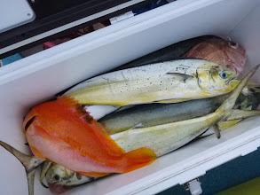 Photo: 釣果です。シイラが真鯛釣りの邪魔をします。