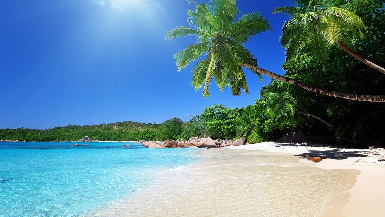 palm-beach-cris-condon-bg.jpg