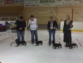 Photo: BIS-1 KASV Panelia 2008 tuomari Jelena Kruus Sulo, Dooris, Kata ja Lempi