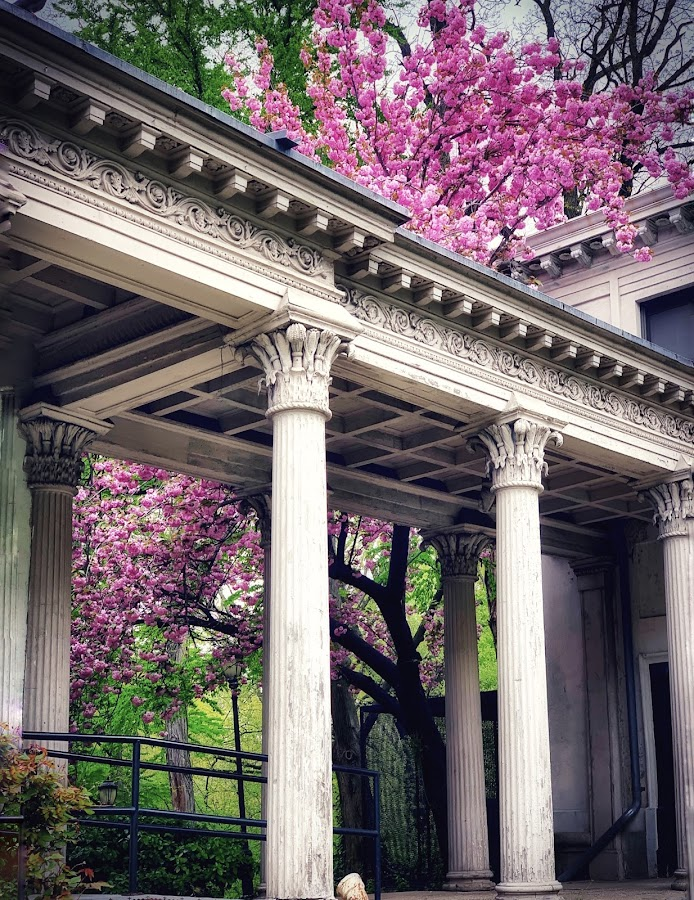 Cherry blossom  by Aurelio Firmo - Buildings & Architecture Architectural Detail ( flowers, cherry blossoms )