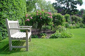 Photo: Bench in Back Garden