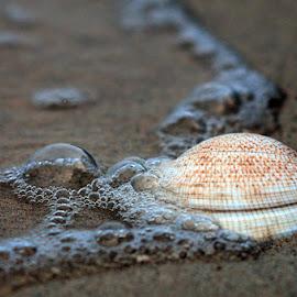 Kerang by Budi Dermawan - Nature Up Close Sand