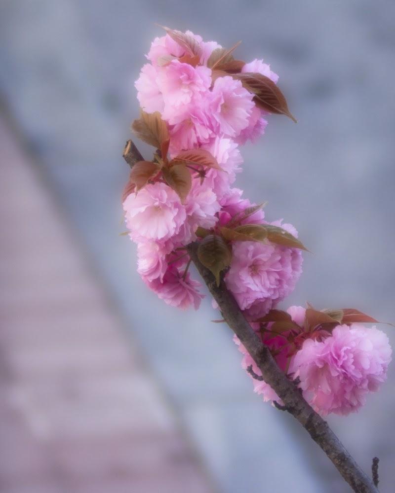 il risveglio della primavera di fabio742008
