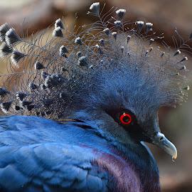 by Manuela Dedić - Animals Birds