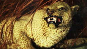 The Zanzibar Leopard thumbnail