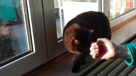 [Artikel] Wat een bange kat me leerde over ondernemen