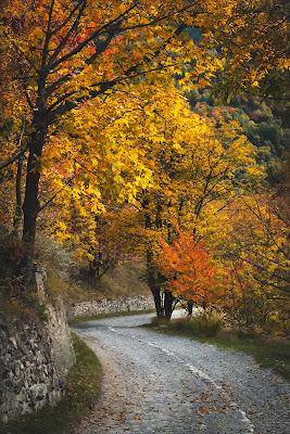 Le fiamme di autunno di POLNGU