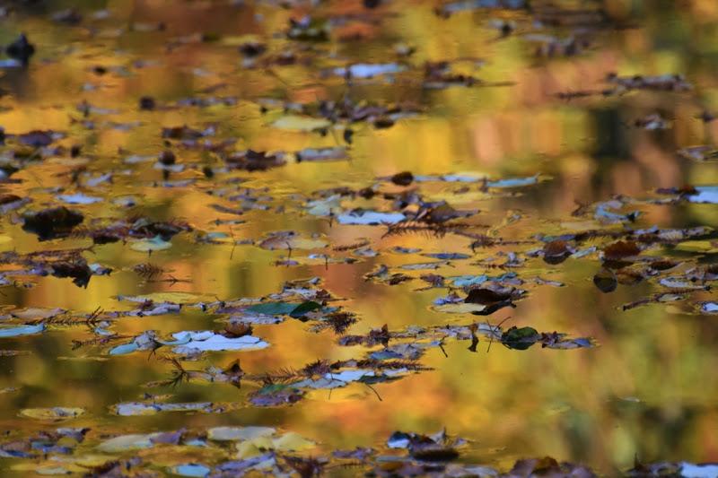 colori sull'acqua di Boboparra
