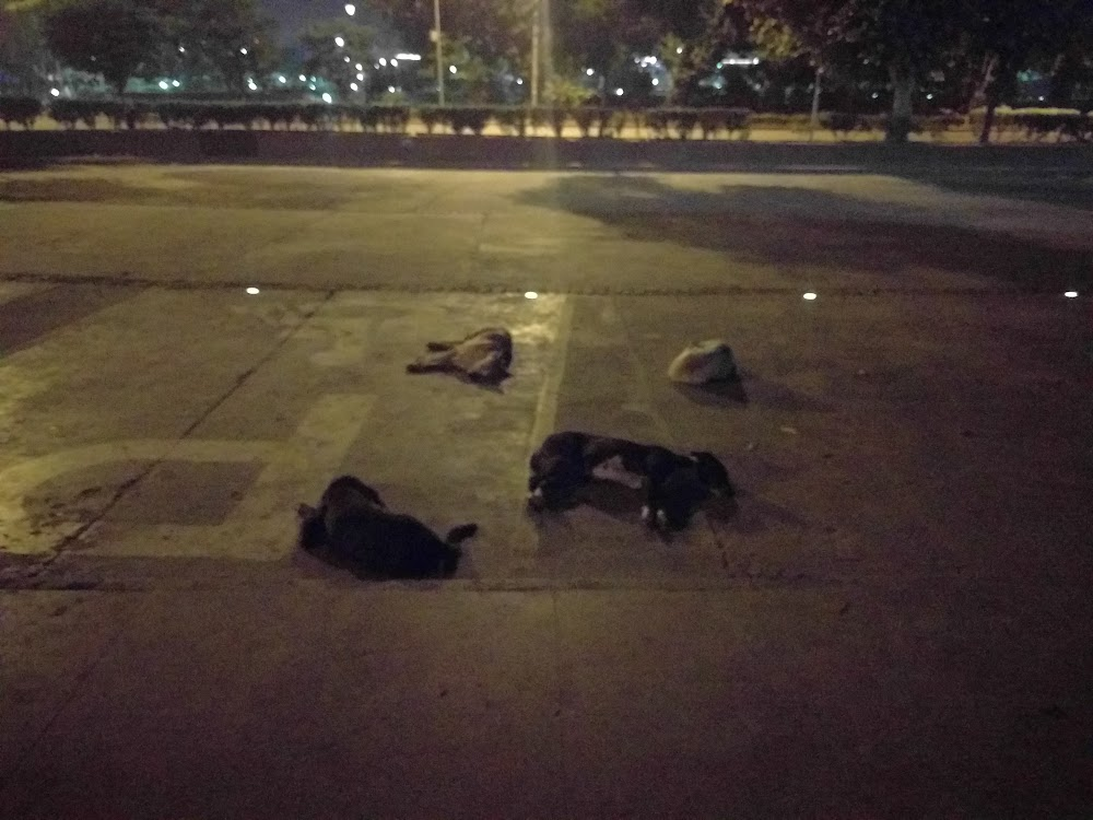 Dogs sleeping in Connaught Place at 3am