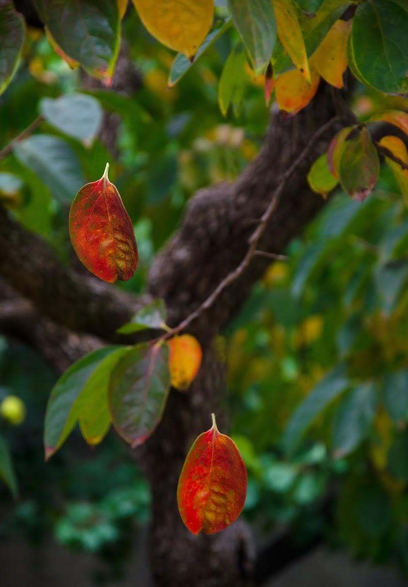 la caduta di Primula Vico