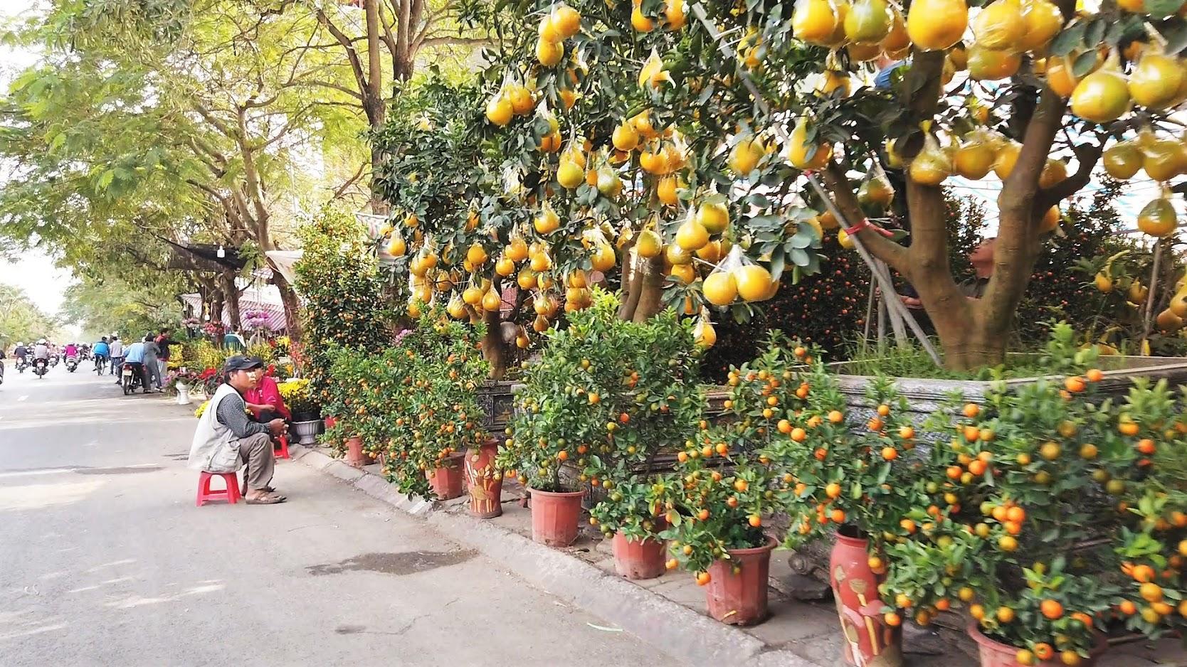 Chợ hoa Tết 2020 đường Lê Hồng Phong ở Hải Phòng 1