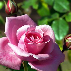 by Irene Edwards - Nature Up Close Flowers - 2011-2013