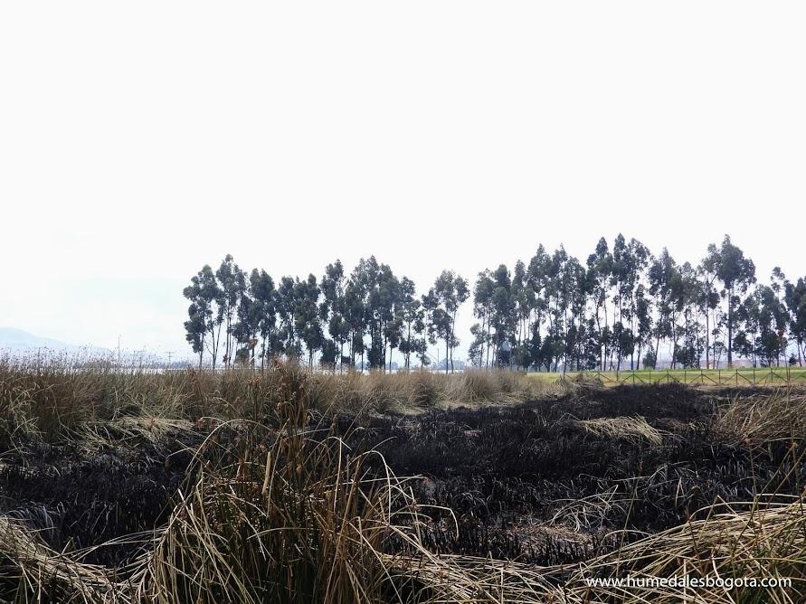 Humedal Tibanica después del incendio