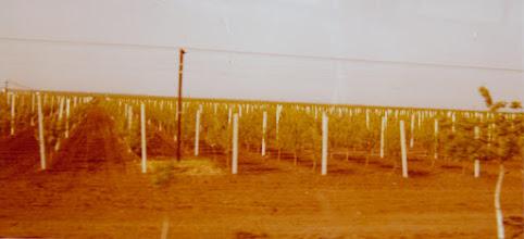 Photo: Viiniviljelyksiä