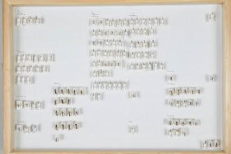 Photo: ZSM-HD-0001500 Various Ichneumonidae sorted to subfamily level