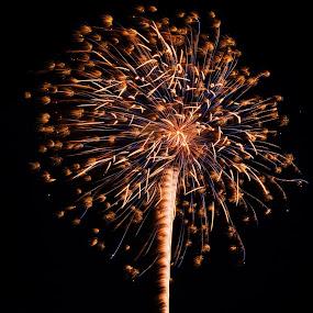 Firework by Reshmid Ramesh - Public Holidays July 4th