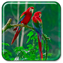 Parrot Live Wallpaper icon