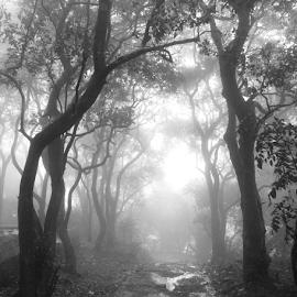 by Sagar Mayekar - Nature Up Close Trees & Bushes