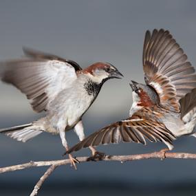 by Trevor Bond - Animals Birds ( i'm bigger than you!,  )