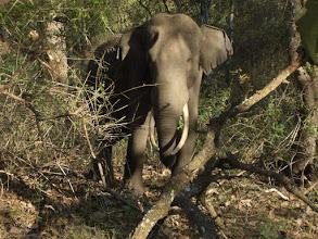 Photo: Wild elephant in Kabini in 2006