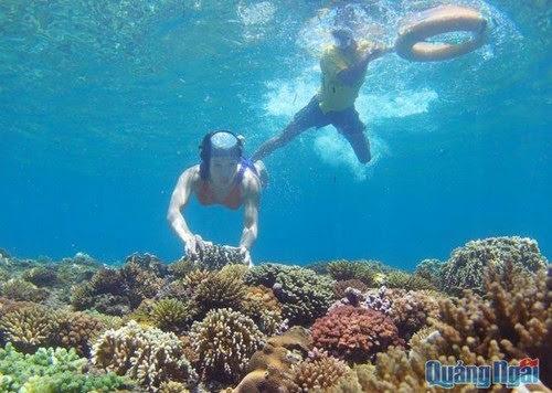 Du lịch đảo Lý Sơn lặn ngắm san hô