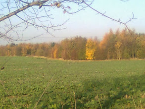 Photo: Woods around West Ashby Manor showing some late autumn colour.