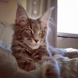 by Eva Falk - Animals - Cats Kittens (  )