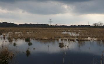Photo: Wildes Moor Osterrönfeld