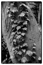 Photo: Bark and Vine - © Ricardo Lagos - Creative Commons (CC BY-NC 3.0)
