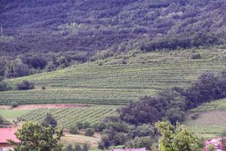 Photo: Widok na winnice