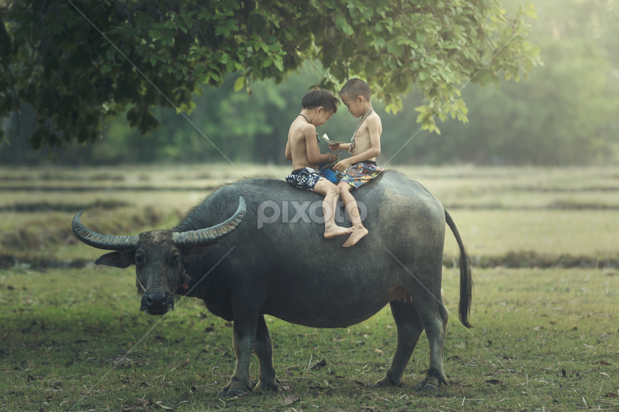 The boys read books on the backs of buffalo. by Sutipond Somnam - Babies & Children Children Candids ( home, person, thai, indoors, study, house, education, cute, people, caucasian, kid, child, stairs, life, nature, student, tree, relaxed, pets, casual, asia, read, childhood, alone, animal, buffalo, green, male, literature, learn, leisure, youth, young, history, two, sweet, sitting, book, local, boy )
