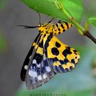 False Tiger Moth ( Day-Flying Moth )