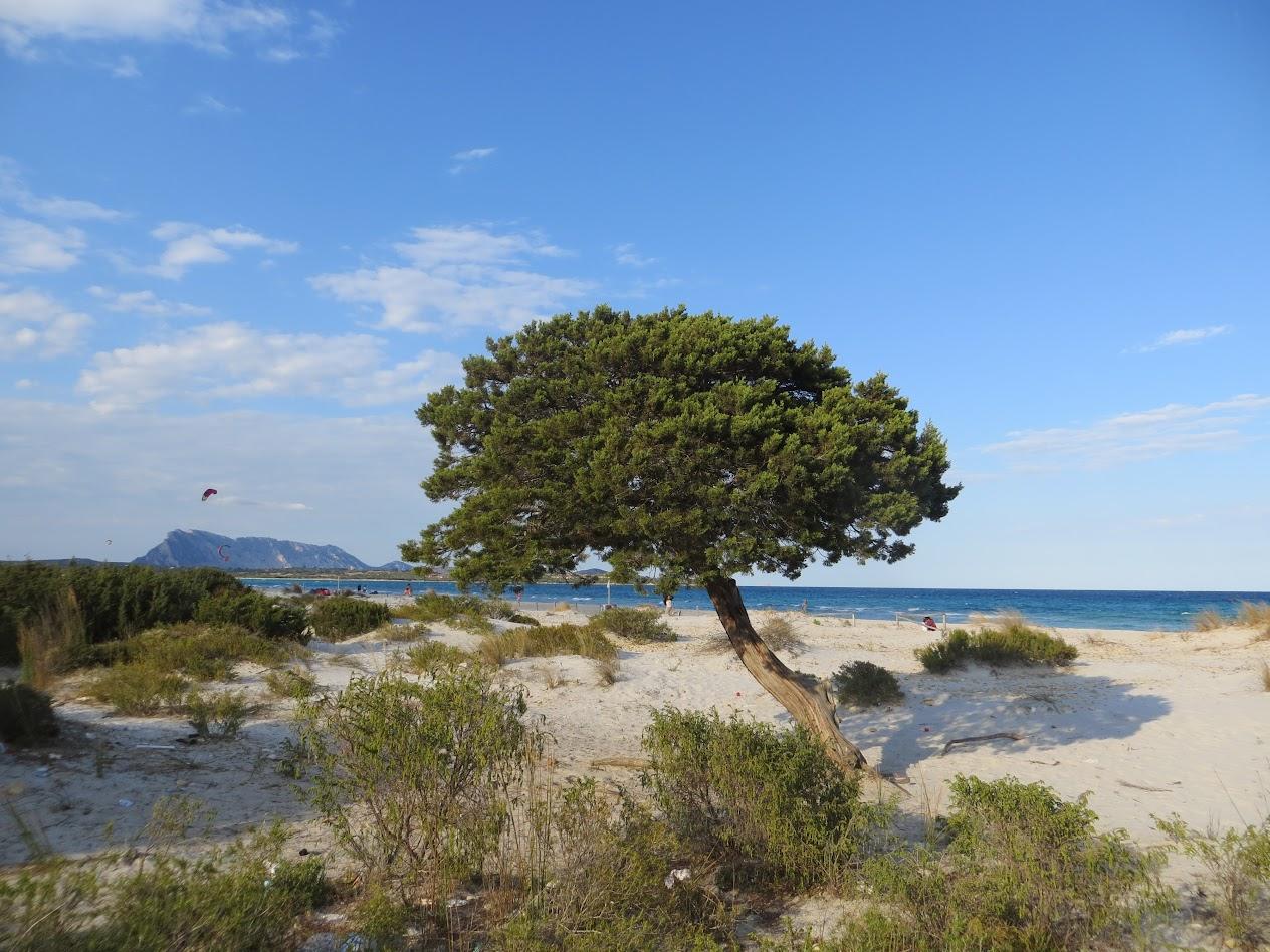 Дерево причудливо красивое