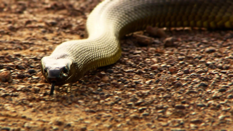 Watch Australia's Most Dangerous live