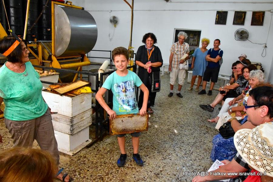 На пасеке. Производство меда. Экскурсия в Израиле гида Светланы Фиалковой.