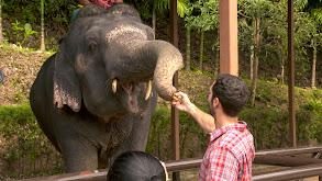 Elephant-Sized Fun thumbnail