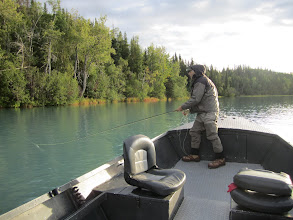 Photo: Fly fishing client of Alaska Drift Away Fishing casting to silver salmon on the middle Kenai river.