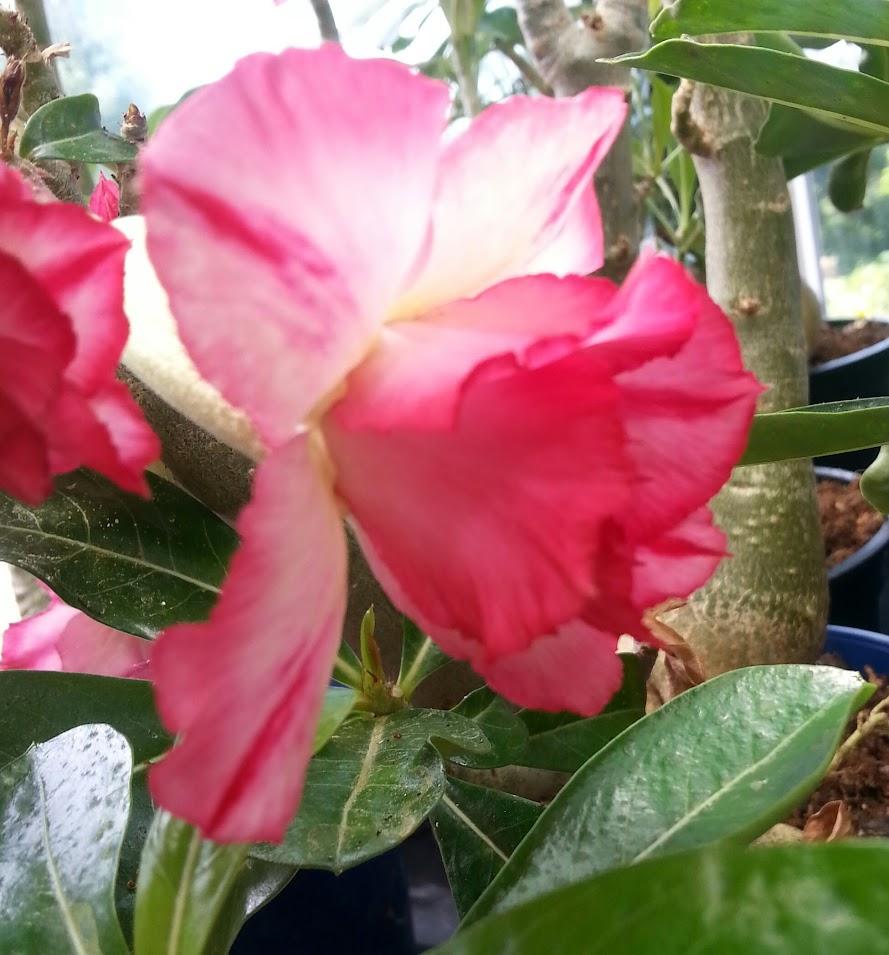 floraisons du mois - Page 27 GZpP-pAtVix_HZVTGMEqm7HX9Q1cSI22KGYS-EuRCBgs=w889-h955-no