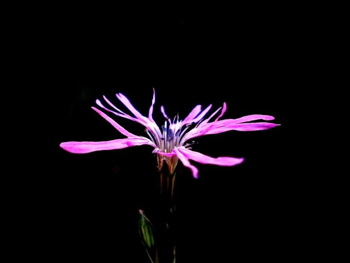 Lonely flower di Martina Sartor