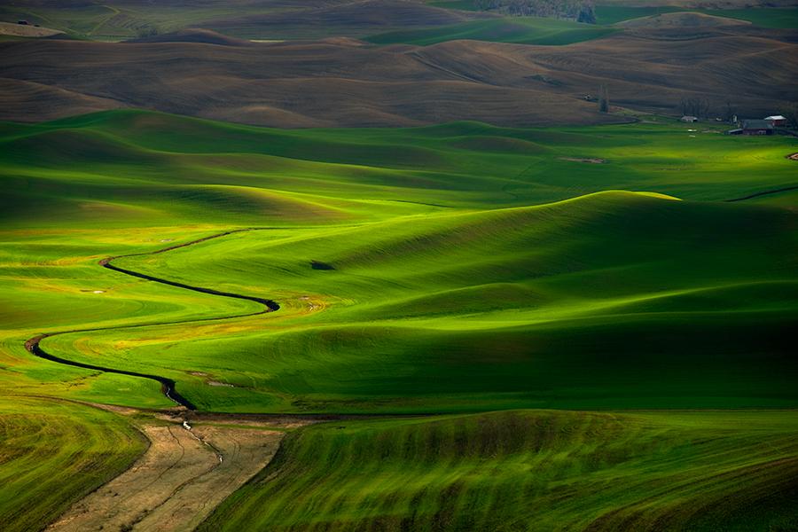 Palouse Velvet by Dean Huggins - Landscapes Prairies, Meadows & Fields ( washington, palouse, green, grain, steptoe, sun, fields )