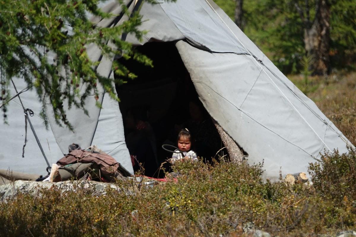 Vie dans le camp des Tsaatan