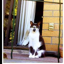 Photo: Pet portrait #intercer - via Instagram, http://instagr.am/p/Ki4m2eJfuz/