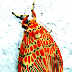 color by Sudhindu bikash Mandal - Animals Insects & Spiders