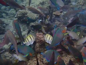 Photo: Feeding shoal, Miniloc Island Resort reef, Palawan, Philippines