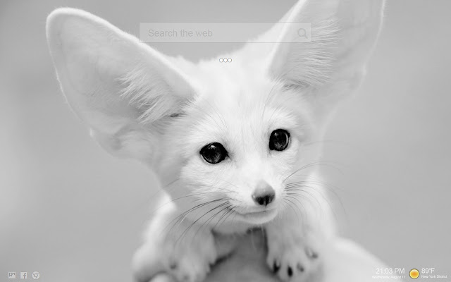 Animals In Black And White HD Tab