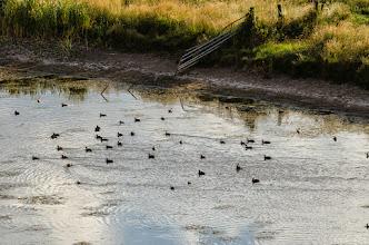 Photo: Waterfowl in Alamosa NWR, CO